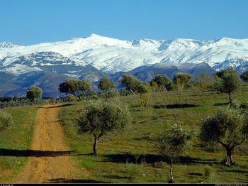 000151-oliviers-devant-la-sierra-nevada-sous-la-neige