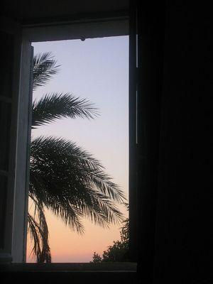 Le palmier a Seillans
