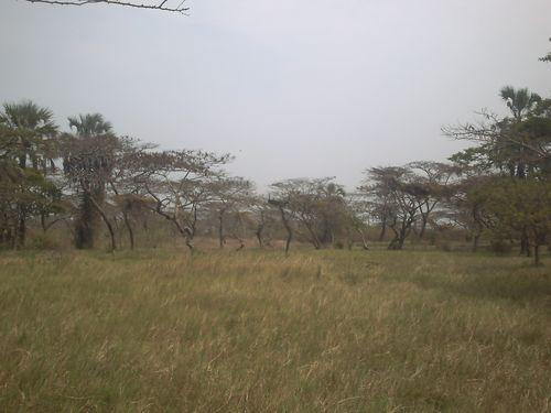 Parc de la Ruzizi