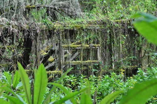 Dian fossey palace