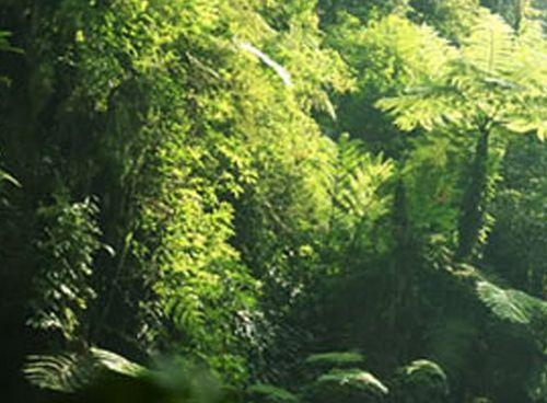Gorilla forest 5