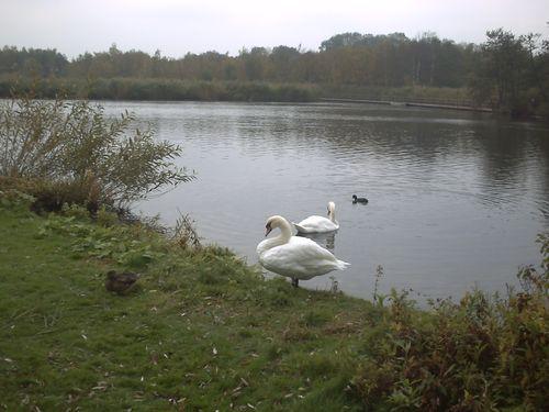 Copenhague gentofte lac (2)