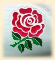 Rose_of_england_4